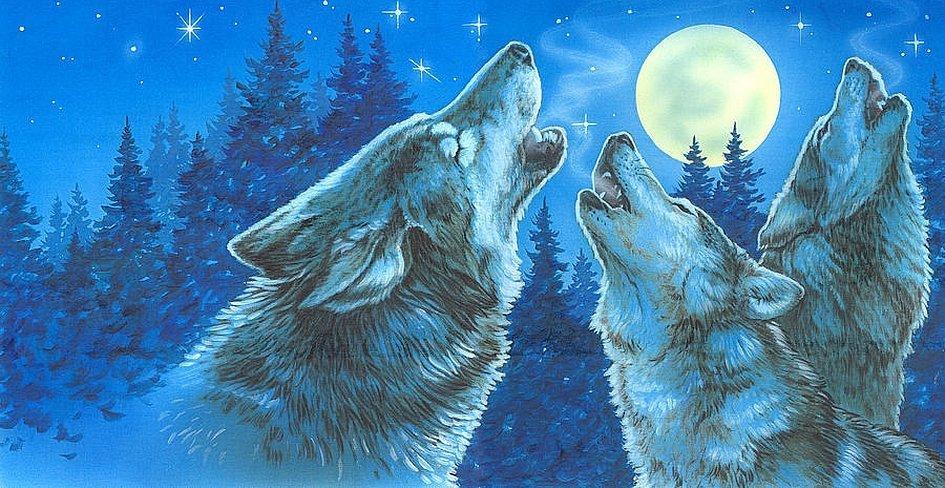 Два волка воют на луну рисунок
