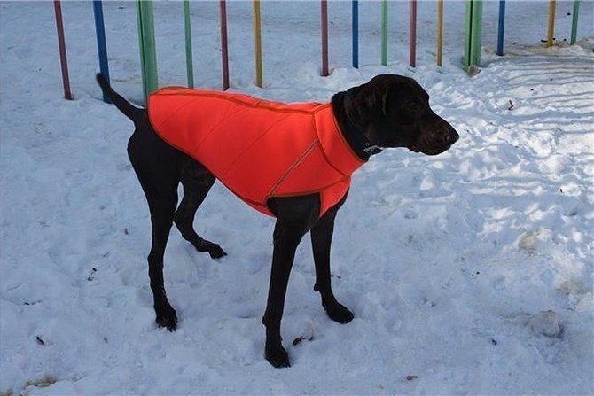 Одежда для собак зимняя больших соба