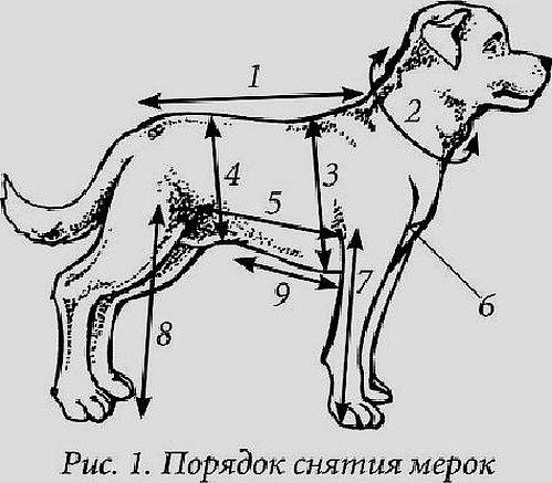 Схема основных промеров собак