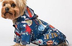 Как пошить собаке одежду: выкройки для мелких пород своими руками