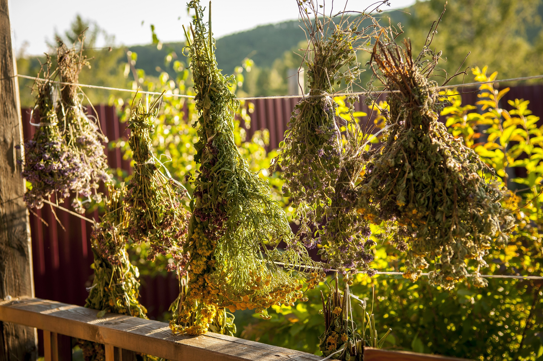 Травяные веники для бани