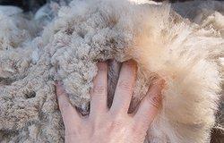 Что такое альпака в составе пряжи и ткани