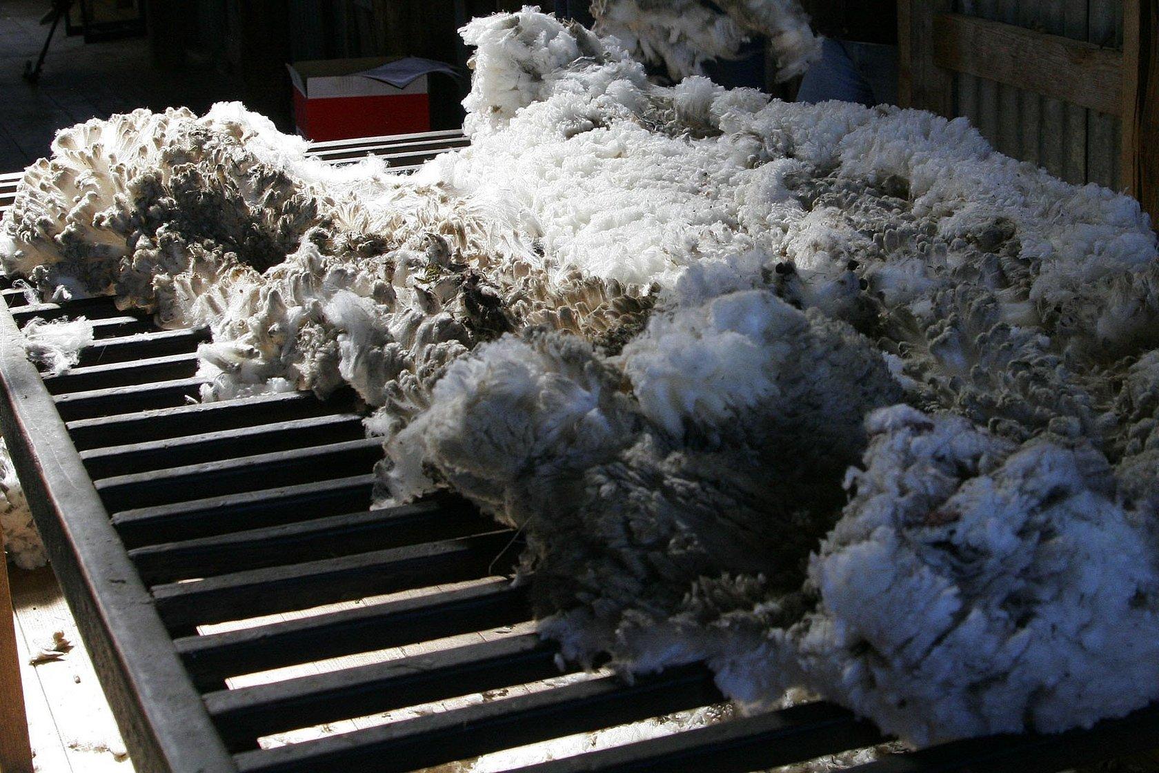 Первичная обработка шерсти овец