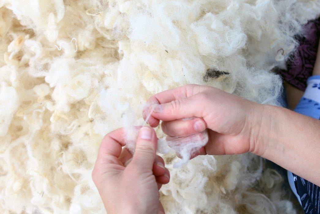 Ткань из шерсти овцы