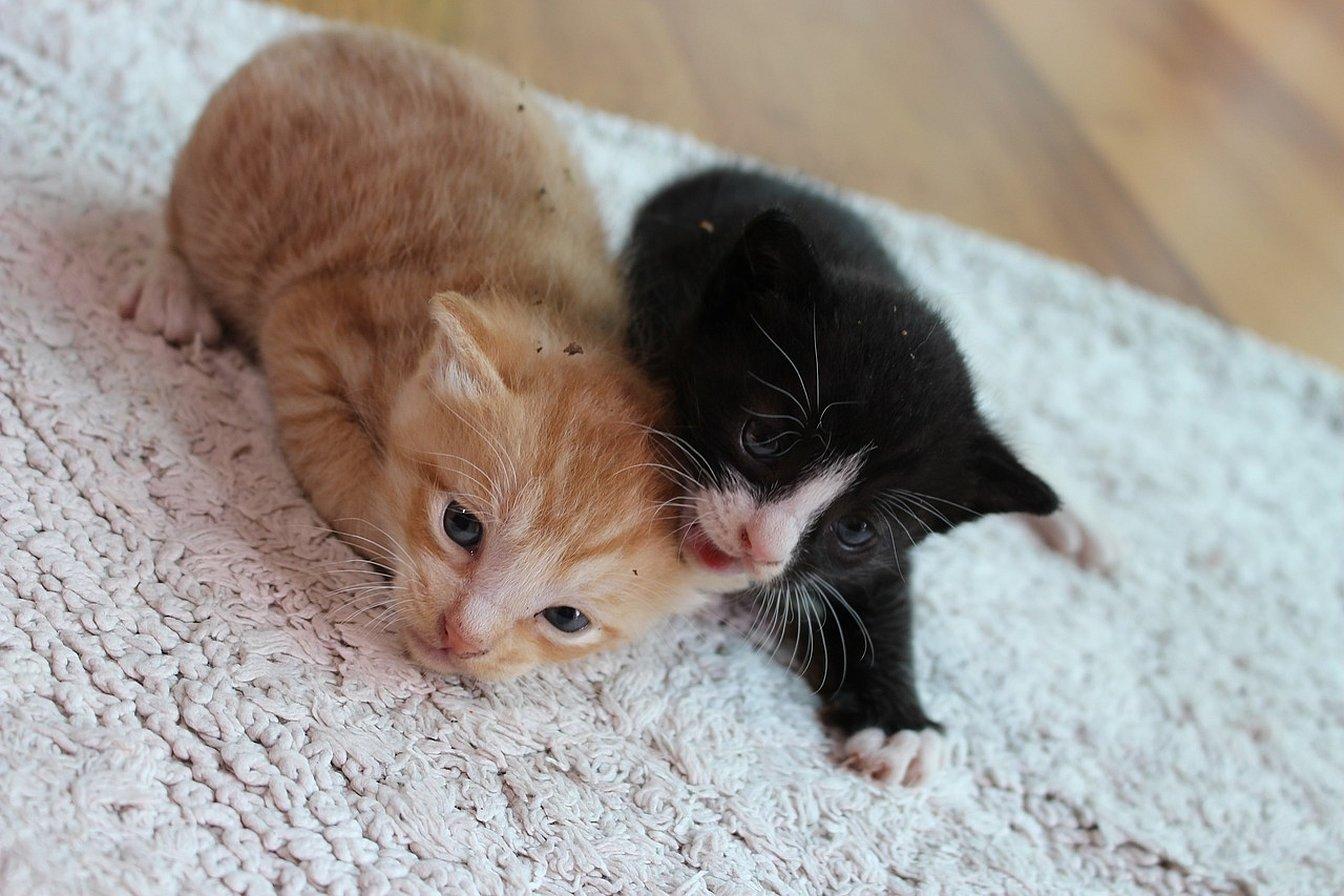 Домашние котики маленькие