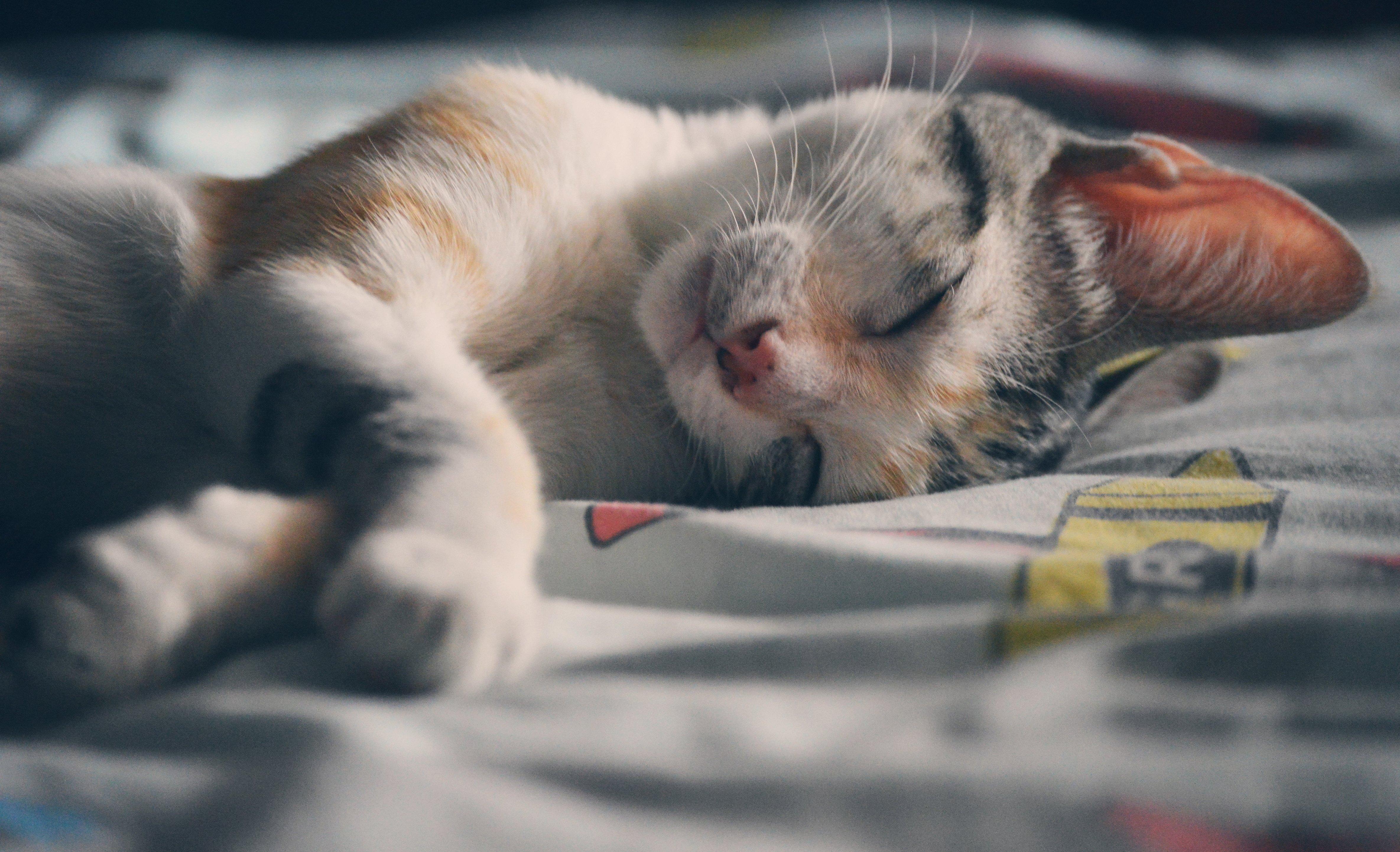 Милые котики проснулись