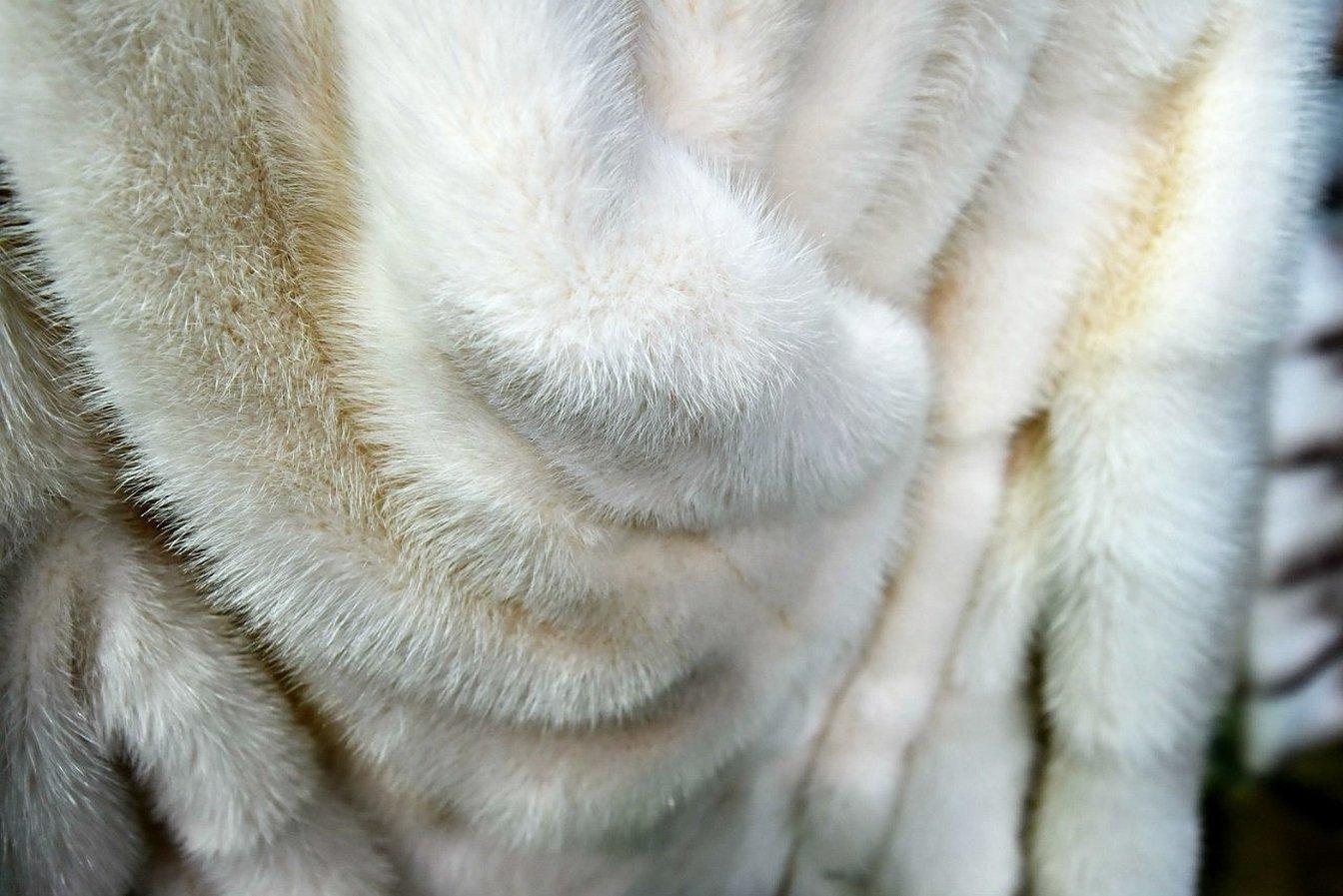 Мех норки светлый