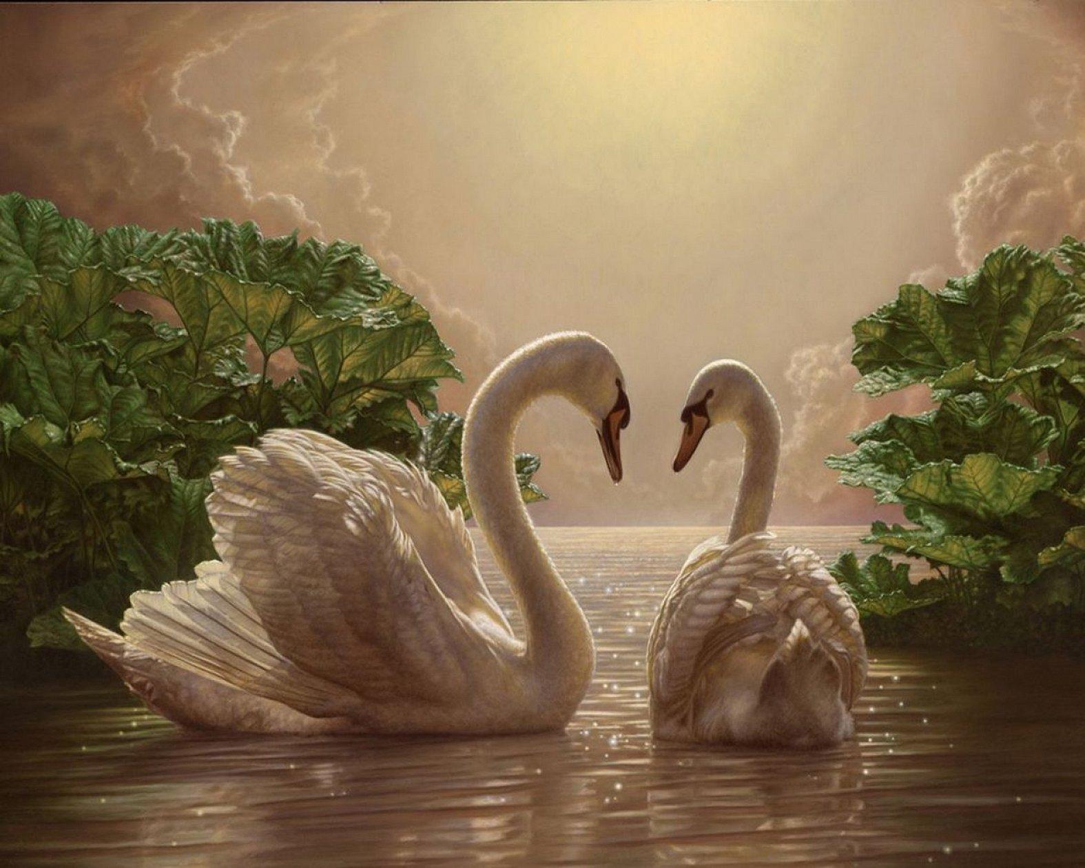 Лебеди картина